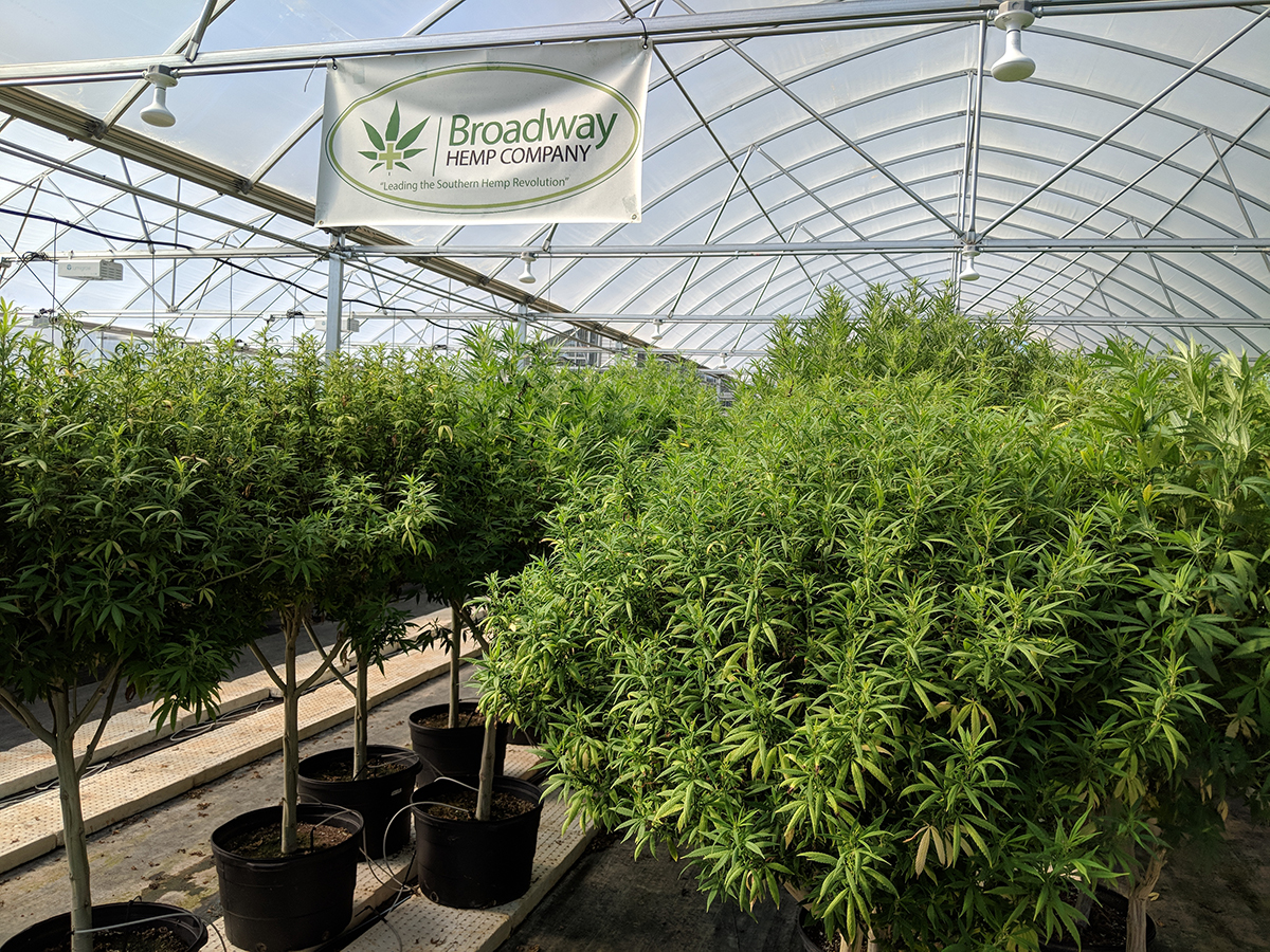 Broadway Hemp has about 50,000 square feet of greenhouse production and 40 acres of field production.