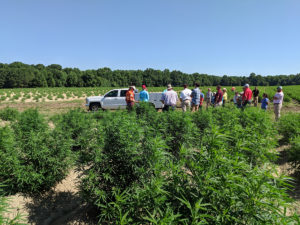 Agents visit the hemp production fields. Grower Ryan Patterson planted about 40 acres, starting in late May. He did three different planting dates.