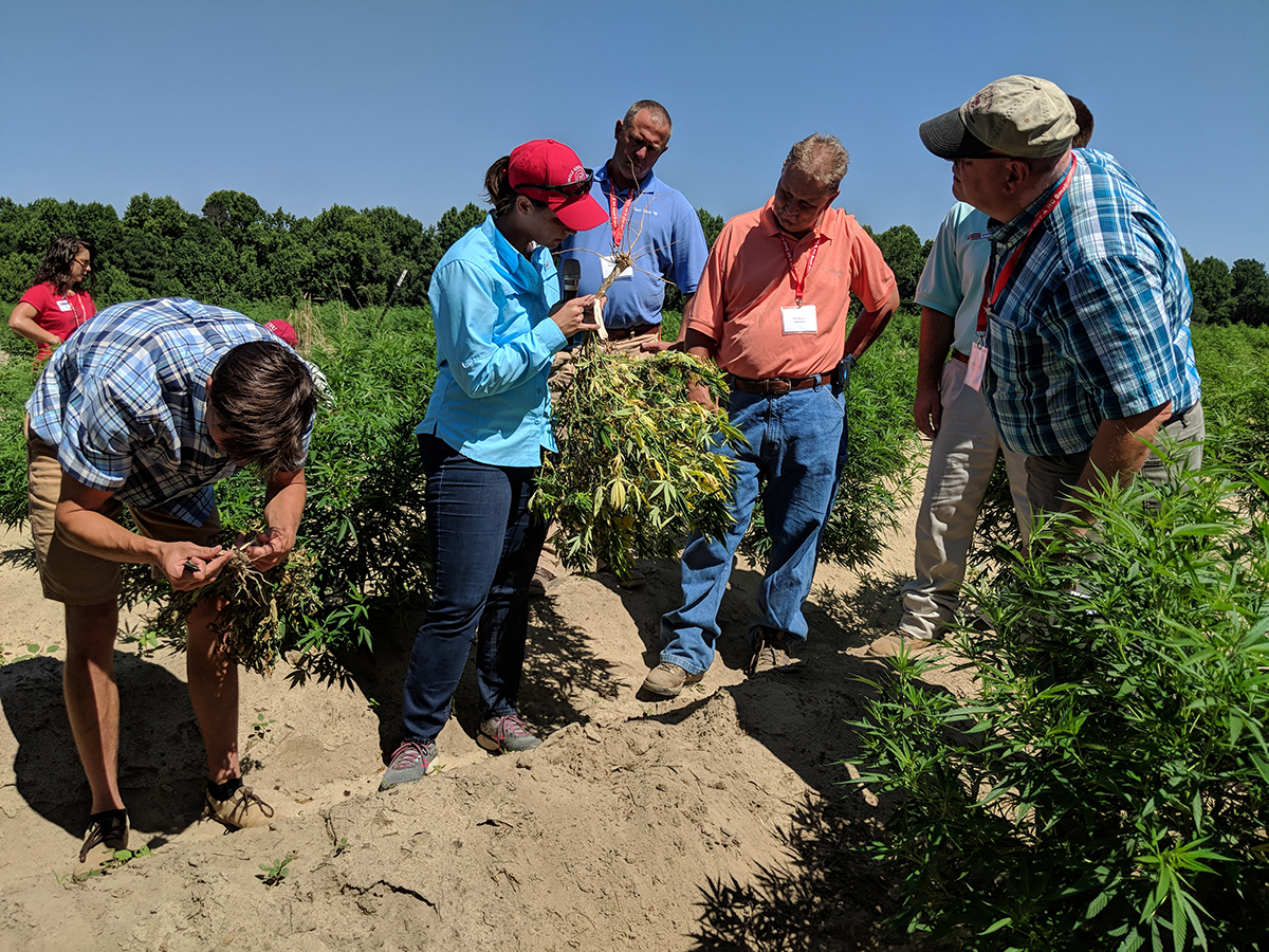 Part of the training was looking at disease management. We saw just one diseased plant in the entire field! Dr. Angela Post talked about disease diagnosis.