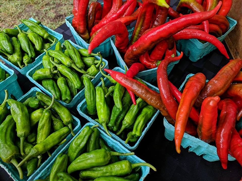 So many peppers at the farmers' markets!