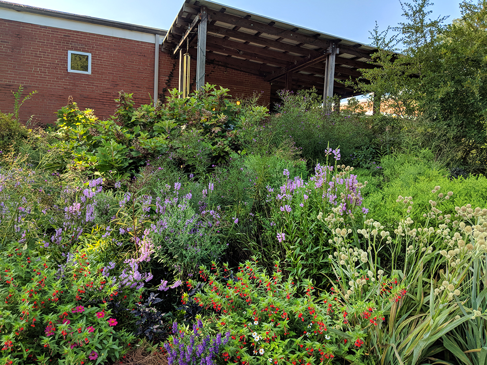 Early September view of one of the pollinator garden beds.