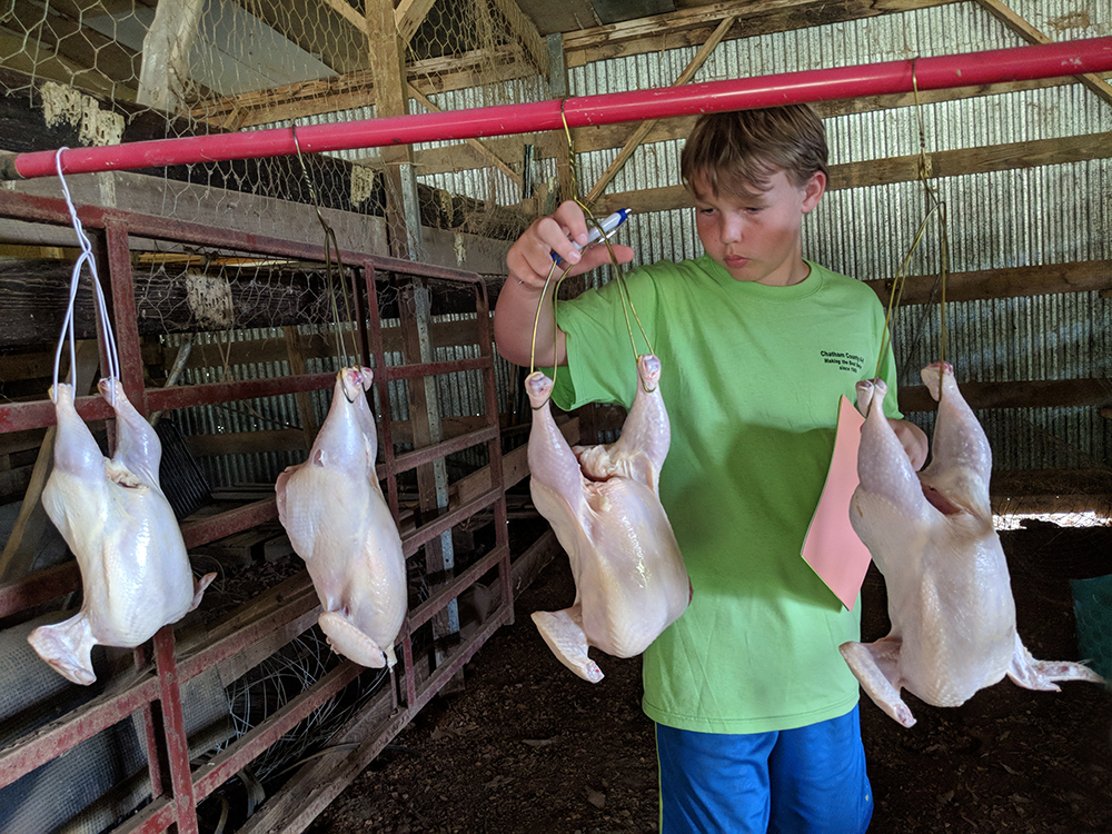 Cole is grading ready-to-cook carcasses. Grade A is best and is what you buy in grocery stores. He has to pick which one is Grade A, B and C – Grades B and C would be cut up and sold as parts.