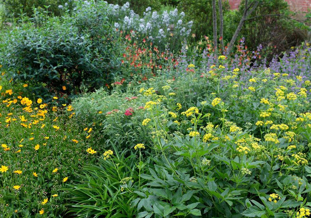Spring in the pollinator garden!