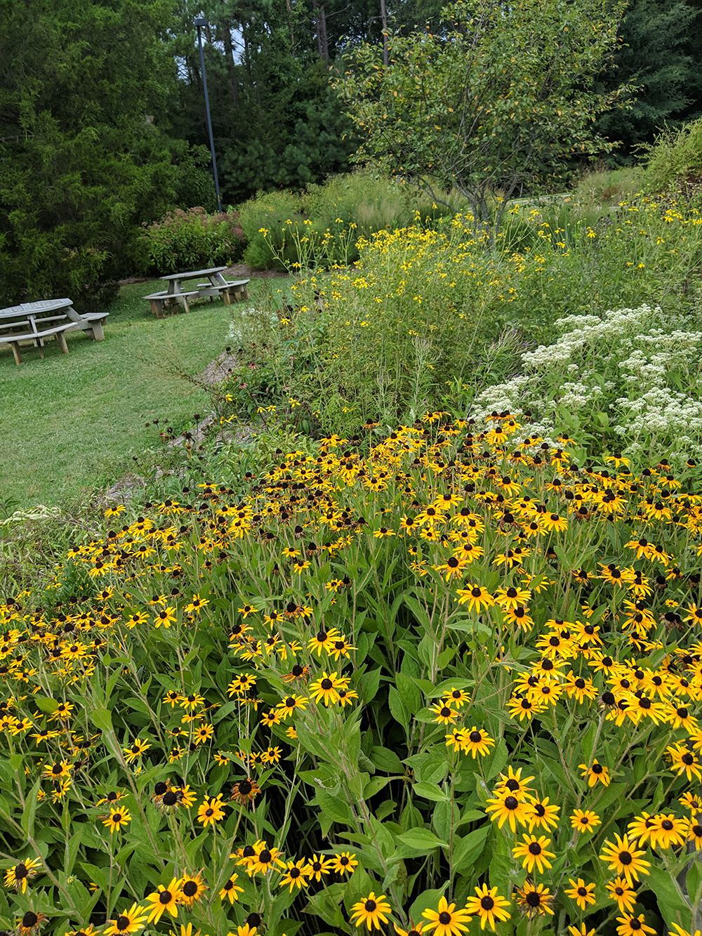 Early August view of one of the pollinator garden beds.