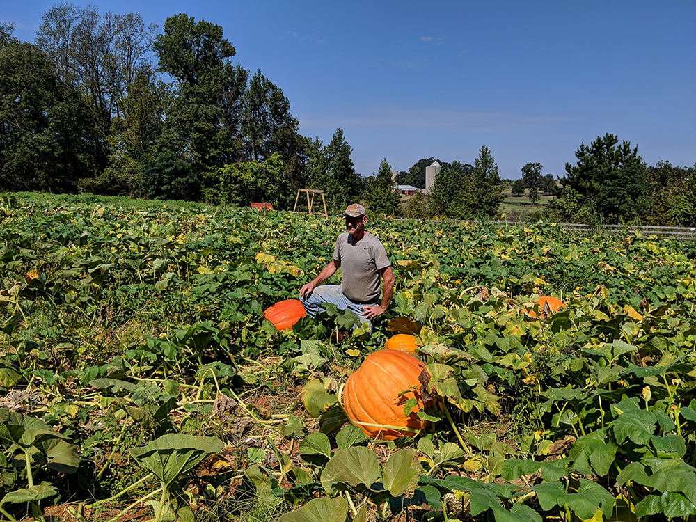 "Farmer Bob Reichel is the ""Mayor of Huckleberry Trail Farm""! And he grows beautiful pumpkins."