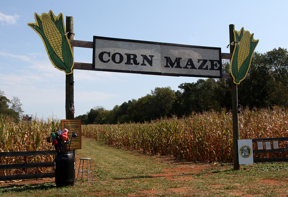 The corn maze is always popular.