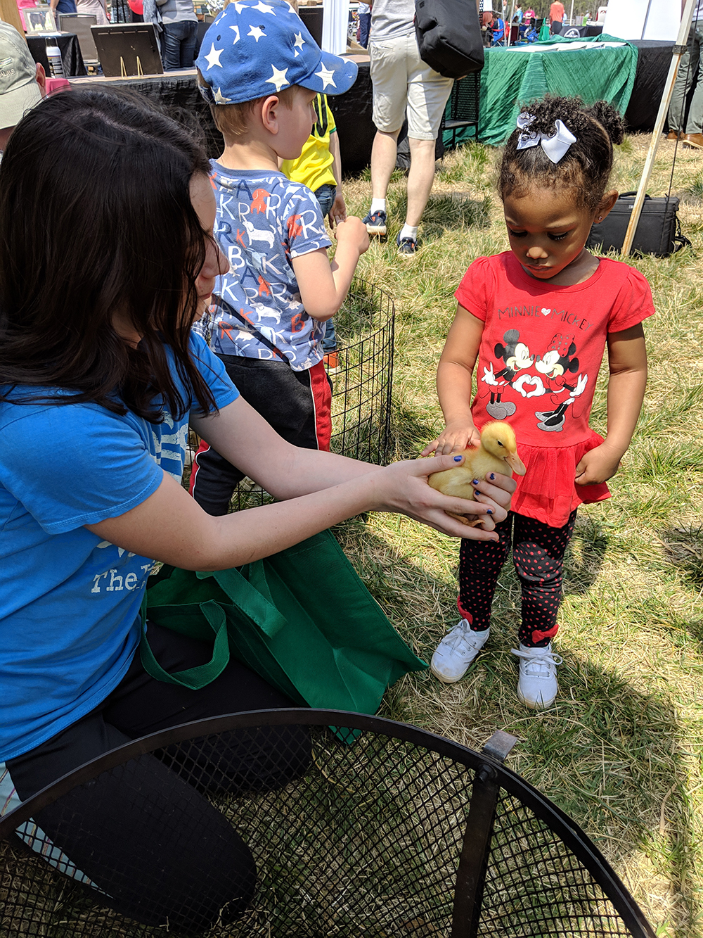 The Lilly Den Farm booth had all kinds of animals for kids to interact with from ducks to chicks, goats, rabbits, and a milking cow.