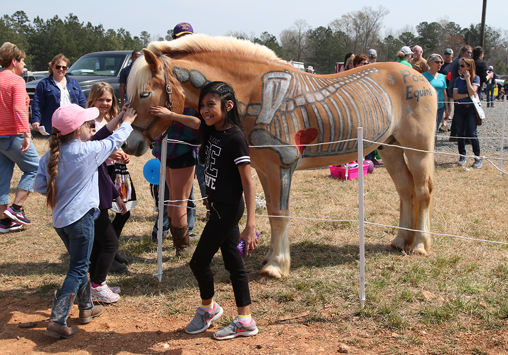 Polaris Equine Mobile Veterinary Clinic's horse was a huge hit with folks of all ages!