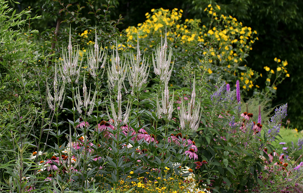 Pollinator Paradise Garden