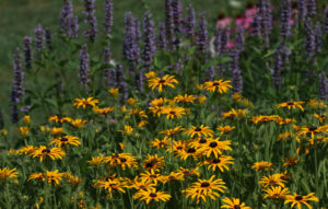 Cover photo for Enjoy a July Virtual Tour of the Pollinator Paradise Garden!
