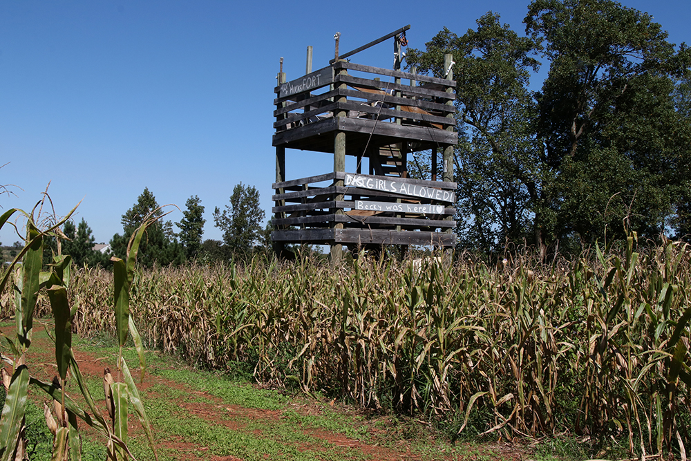Corn maze tower