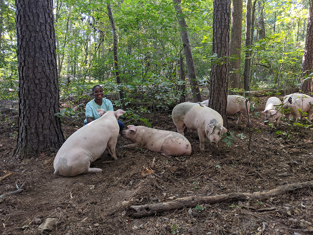 Woman with pigs