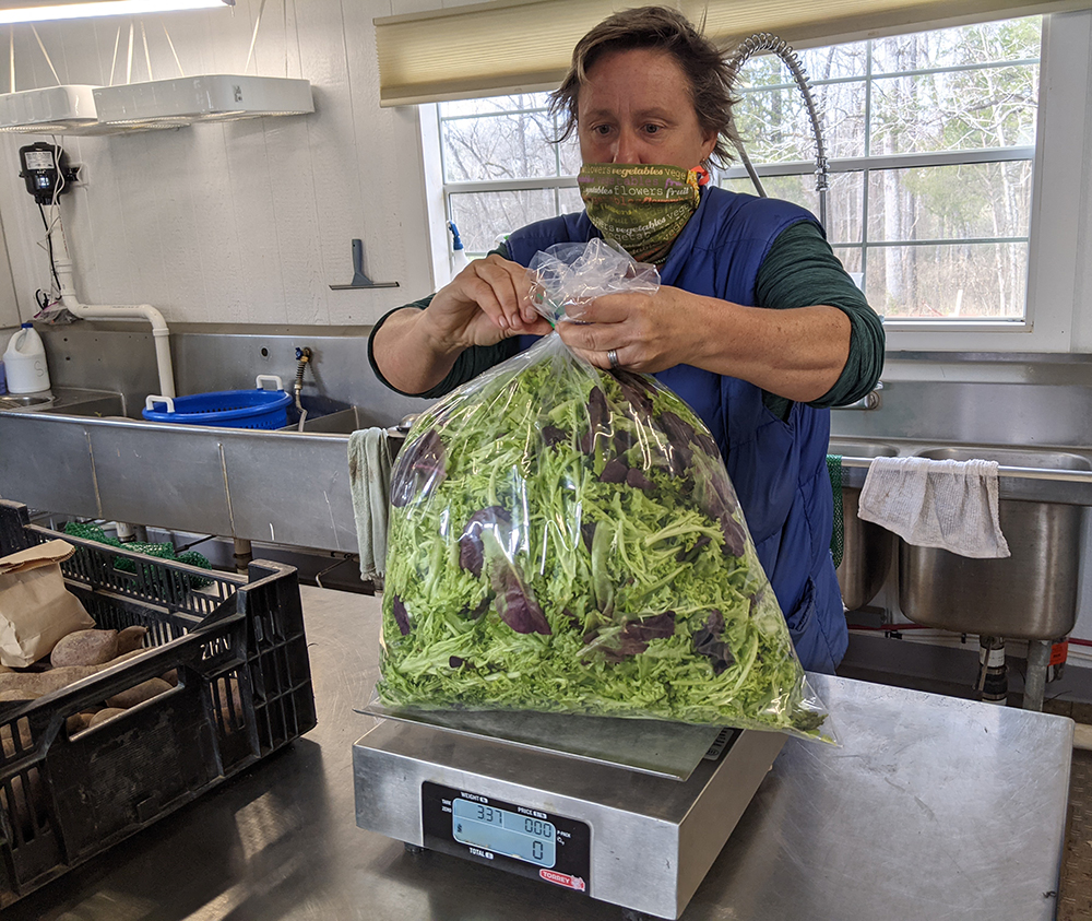 Meredith weighs the bag of lettuce for her harvest records