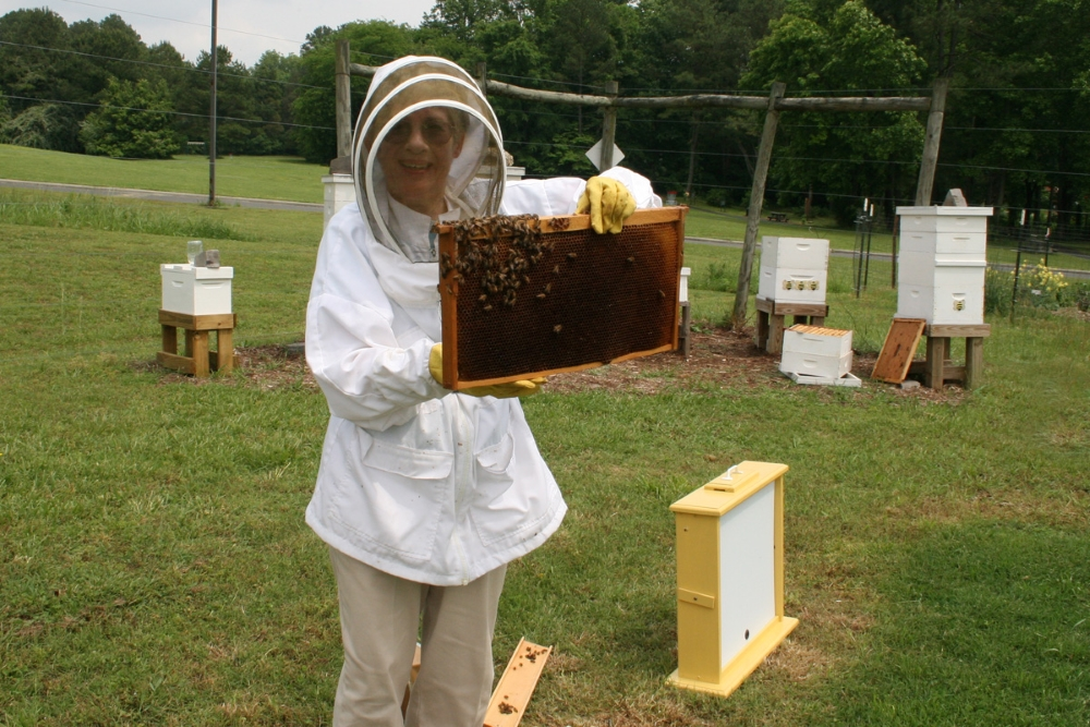 Judy returns the frame from the observation hive to the CCBA Apiary