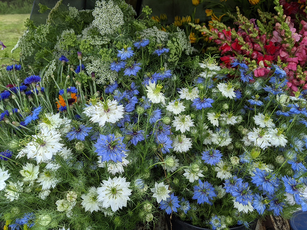 Blue, white, and red flowers