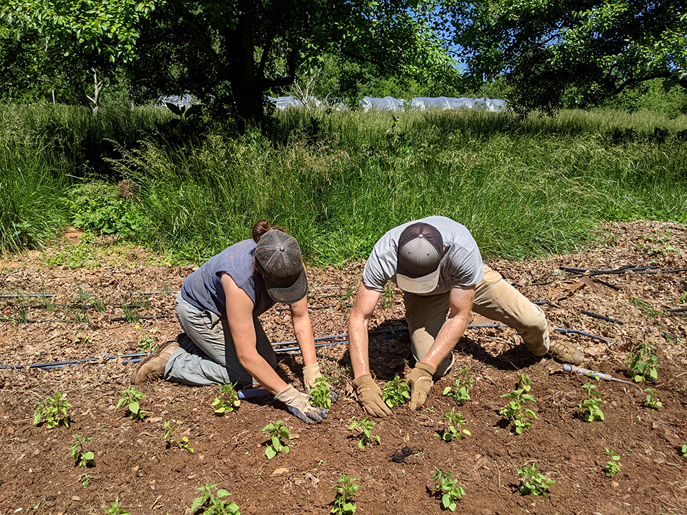 Man and woman planting herbs