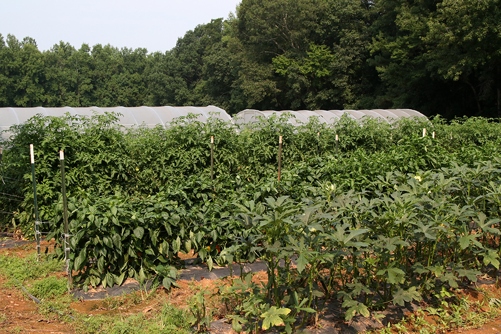 Crops in high tunnels
