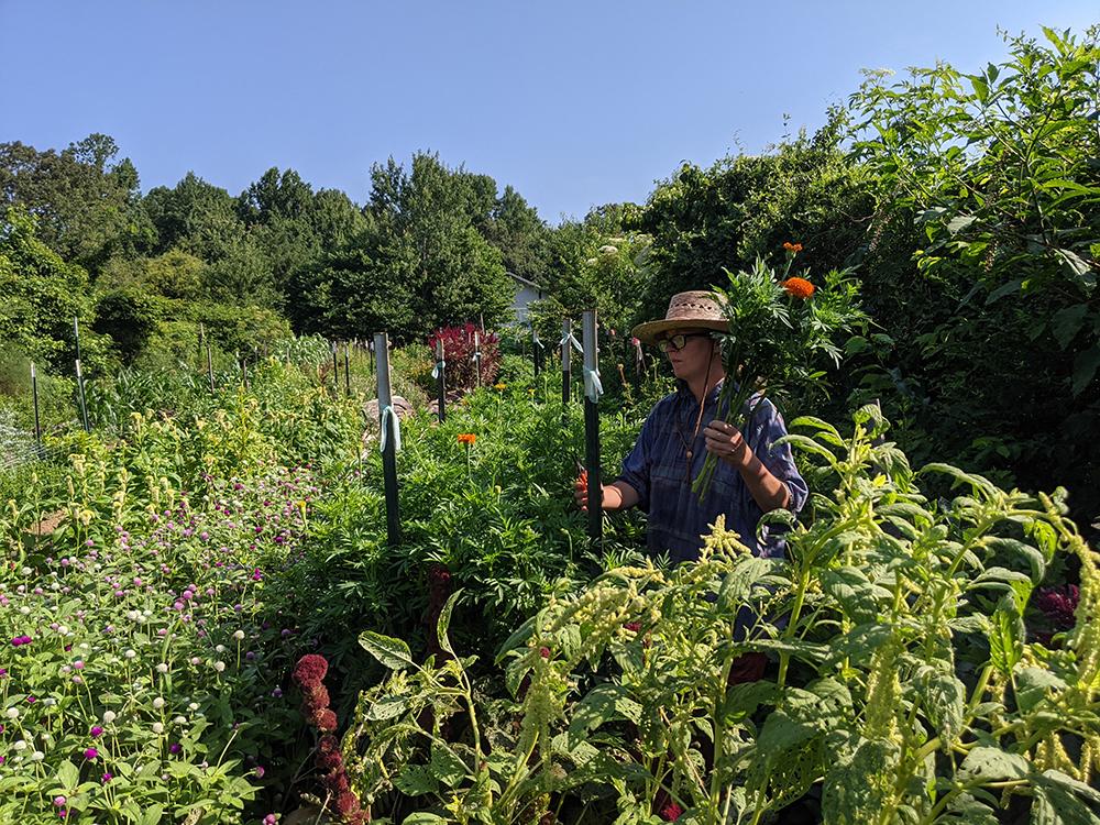 Woman harvesting flowers